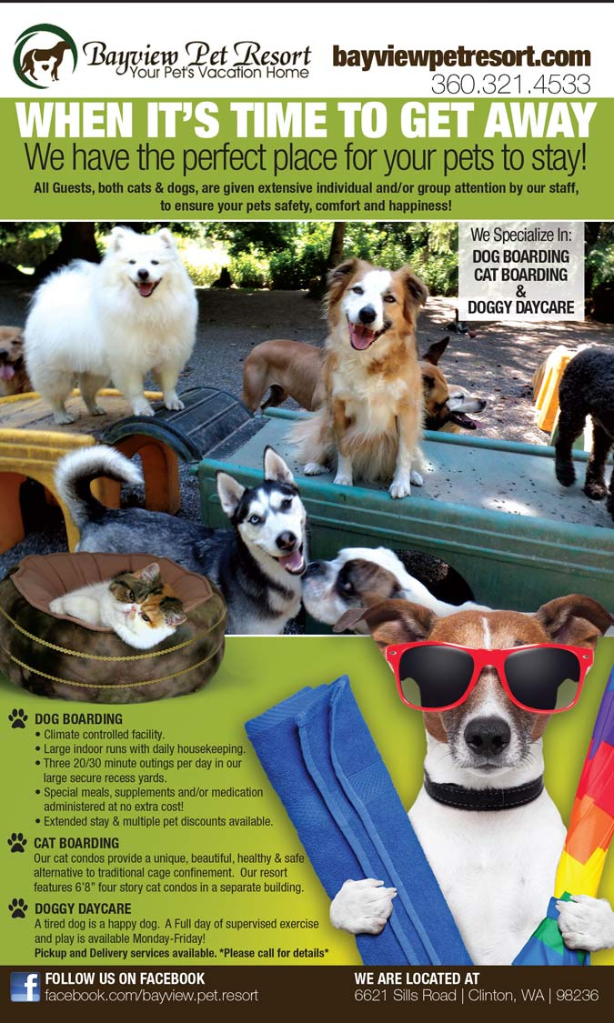 Bayview Pet Resorts Seattle Washington Ad Design By A Digital Mind
