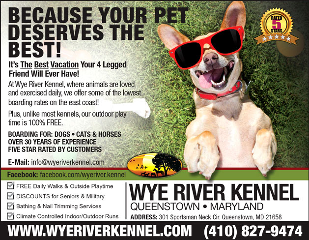 Wye River Kennel Queenstown Maryland Ad Design By A Digital Mind